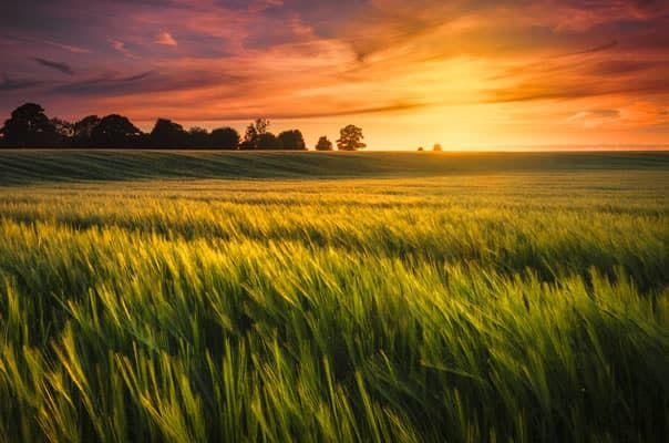 Upgrade Your Listing to Showcase for 10x More Views -blog.landflip.com #realestate #land #LANDFLIP
