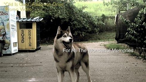 シンガポールのアニマルシェルターが視力を失った犬へ追悼動画を公開 愛情が伝わってくると話題に