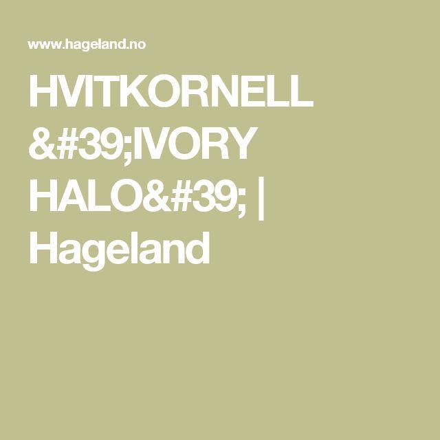 HVITKORNELL 'IVORY HALO' | Hageland