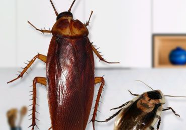 How to Get Rid of Cockroaches in Kitchen Using Simple ...