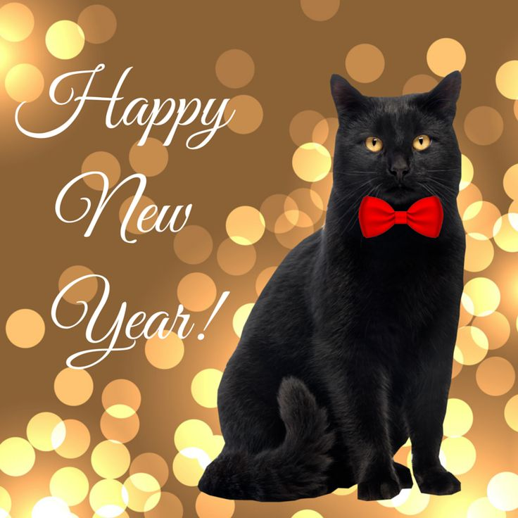 Image result for happy new year with cats