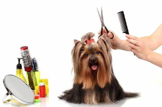 Σκύλοι με μακρύ τρίχωμα, όπως τα Κόλεϊ, τα Νέας Γης, οι Γερμανικοί Ποιμενικοί και οι σκύλοι τύπου Σπιτζ έχουν ανάγκη από περισσότερο χτέν...