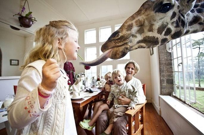 """""""قصر الزرافات"""" في كينيا... تجربة فندقية رائعة"""