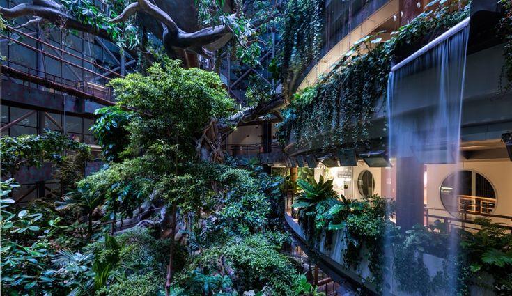 Http Www Azuremagazine Com Article Canadian Architects Build A Rainforest In Dubai Rainforest Architect Building