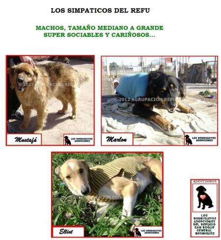 ¡Hermosos Cachorritos en adopción publicados en Vivavisos! http://adopcion-mascotas.vivavisos.com.ar/adoptar-dar-mascota+general-rodriguez/todos-en-adopcion-responsable/41239300