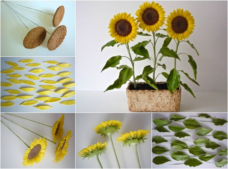 Sunflower, Helianthus annuus - Napraforgó https://www.facebook.com/Csodavirag