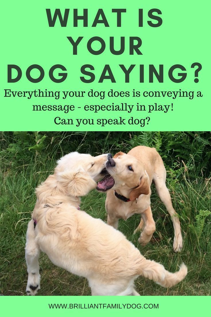 Just Like Us Dogs Never Do Anything For No Reason With Images Aggressive Dog Reactive Dog Dog Quotes