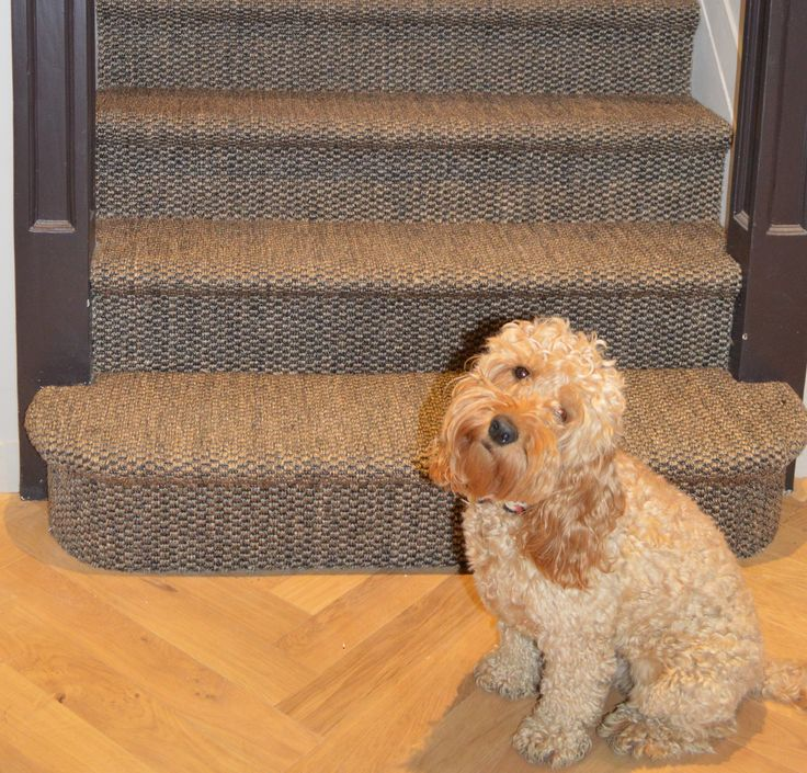Dog Throw Up On Sisal Rug: 13 Best Cunera & Trappen Images On Pinterest