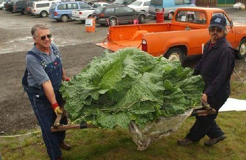 Gardening in Alaska | Alaska | Pinterest