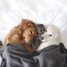 The dogs Watson and Kiko are the best friends of the cat Harry – friendship dogs cat 14