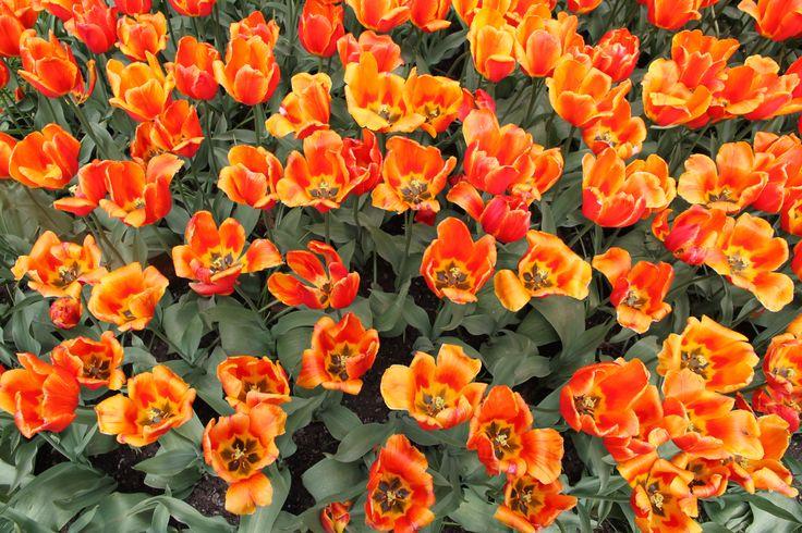 Flowers in Oslo