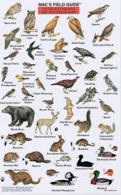 Image result for Vancouver island identification guide