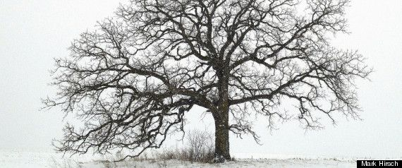 Mark Hirsch, a 52-year-old photojournalist based out of Dubuque, Iowa, has formed an unlikely attachment to a tree. The attachment is so strong, in fact, that he's spent the last year photographing it, venturing out to this lone oak each day to capture a unique snapshot of his photosynthetic friend.