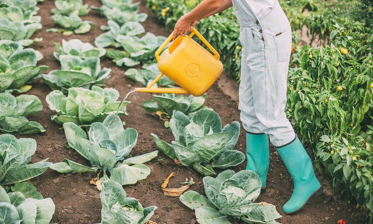 mbg is excited to announce a new partnership with Food Tank — a nonprofit dedicated to finding a sustainable solution to hunger, obesity, and poverty worldwide. Stay tuned for more of their expertise