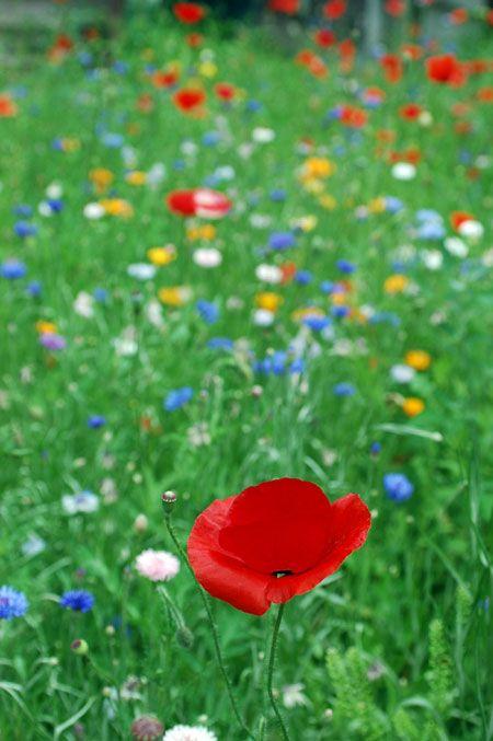 I think I like wild looking gardens!~KS