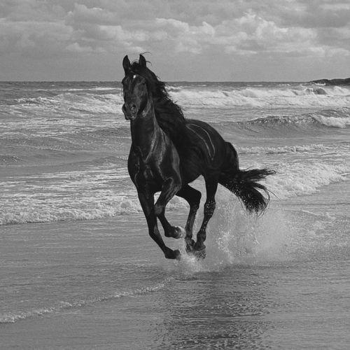Run wild ~ Run free | Horse Power | Pinterest