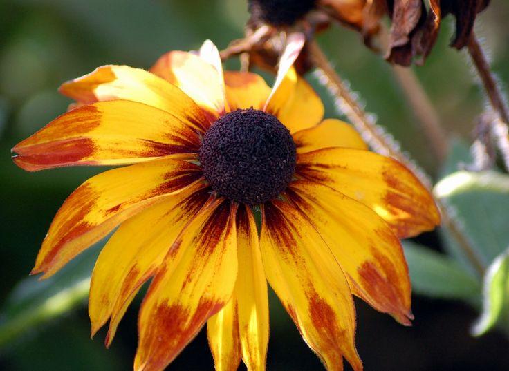 Portfolio Multimedeia: Keltainen on auringonhattu