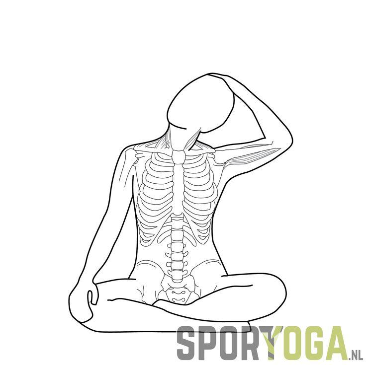 Neck stretch anatomy yogapose from sportyoga.nl