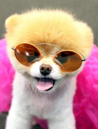 Boo the Dog | Boo the Dog Models Eyewear for Monocle Order : Lucky Magazine