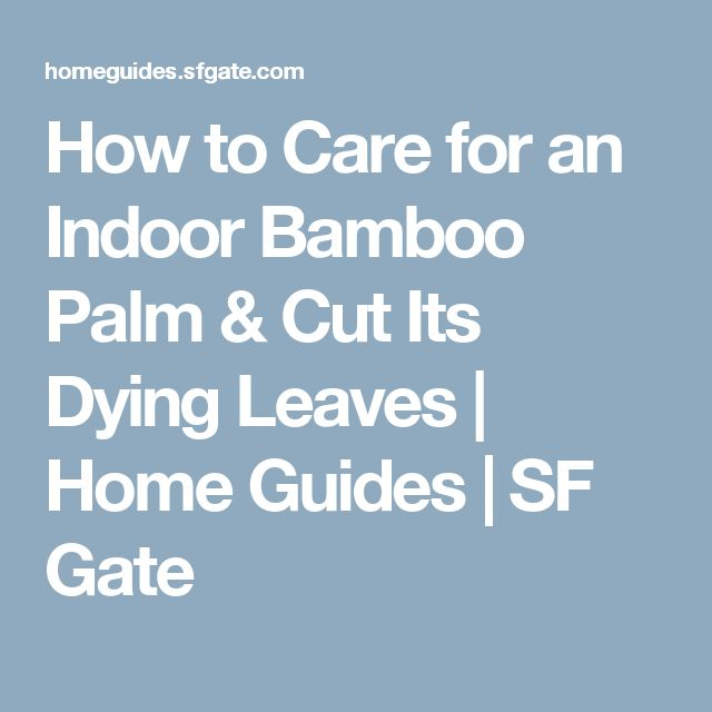How to Care for an Indoor Bamboo Palm & Cut Its Dying Leaves | Home Guides | SF Gate
