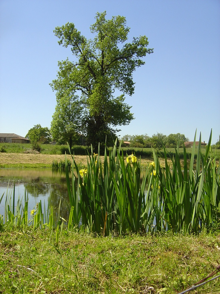 Limousin - Favourite family holiday destination in France 2012