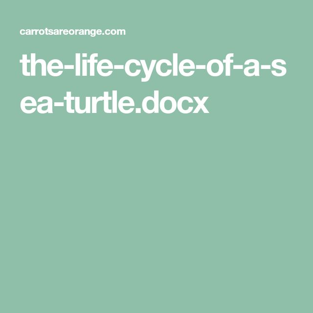 the-life-cycle-of-a-sea-turtle.docx