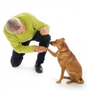 Comment adopter un chien à la SPA