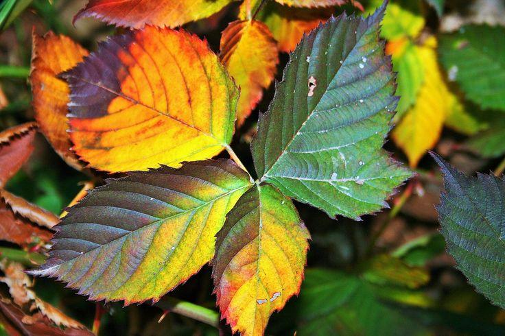 Burcunuzun şifalı bitkisi hangisi? http://www.sagliklibesin.net/2014/11/burcunuzun-sifali-bitkisi-hangisi.html