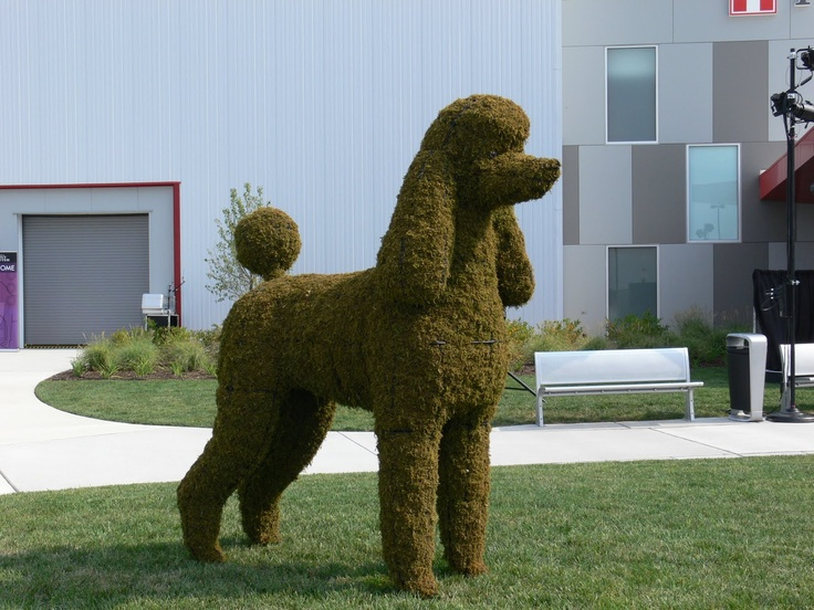 Huge Poodle Topiary Over 6 Feet For Sure At Purina Farms