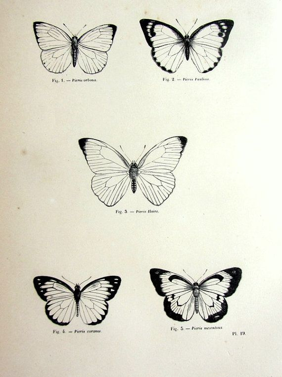 Gorgeous vintage butterfly print, antique original 1860 lepidoptera french engraving, papillon plate illustration, insect zoology  framing