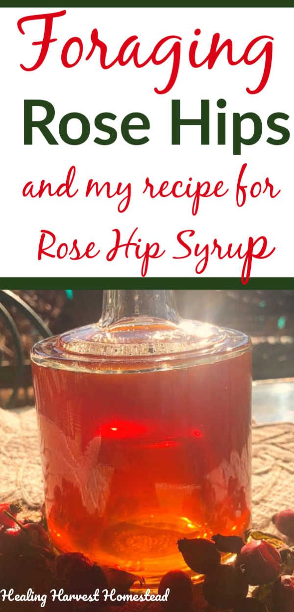 How to Forage Rose Hips and a Recipe for Rose Hip Syrup ...