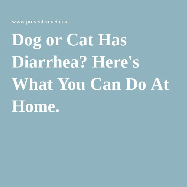 Dog or Cat Has Diarrhea? Here's What You Can Do At Home.