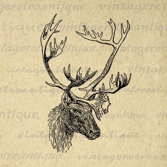 Printable Image Deer with Antlers Graphic Animal Digital Download Vintage Clip Art Jpg Png Eps 18x18 HQ 300dpi No.497 @ vintageretroantique.etsy.com