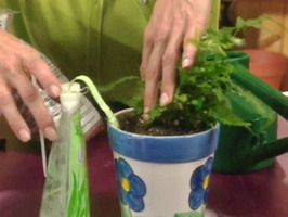 Watering plants when you are away - wick placed in soil draws water from reservoir