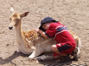 """Come spiega il LamaMichel Rinpoche in questo video, la parola Karma significa """"azione"""". Le nostre azioni possonoessere buone oppure cattive. Quelle buone generano conseguenze positive, quellecattive invece portano a conseguenze negative. La legge del karma è chiamata anche """"legge di causa ed effetto"""". Il discorso fatto nel video è molto interessantema non sono d'accordo su ciò che dice l'autore in merito all'uccisione del cerbiatto, dal tono pare voglia dire che uccidere un bambino è ..."""