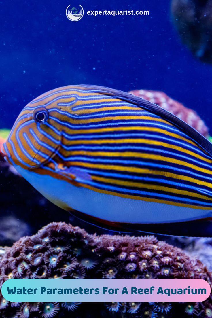 Most Important Water Parameters For A Saltwater Reef Tank Saltwater Fish Tanks Reef Tank Marine Fish Tanks