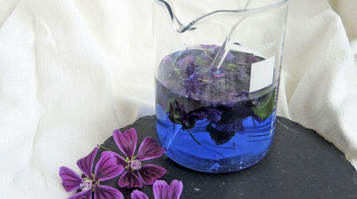 Das Besondere, fast magische an der Pflanze: Das Wasser färbt sich blau! Schon nach wenigen Minuten im kalten Wasser, entfaltet sich der blaue Farbstoff.
