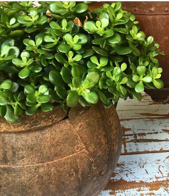 Plants for pots at front door