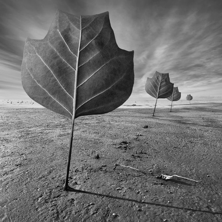 Plant Action by Dariusz Klimczak on 500px