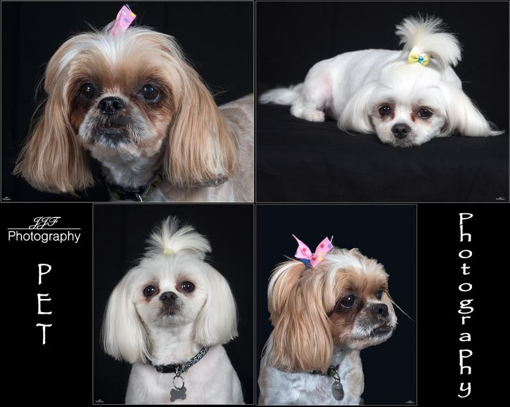 Studio Pet Photography Now Available 0488 258 881  Copyright JJF Photography