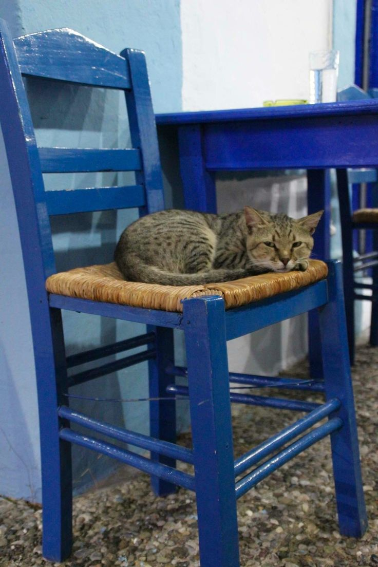 Karpathos Pigadia lovely taverna cat