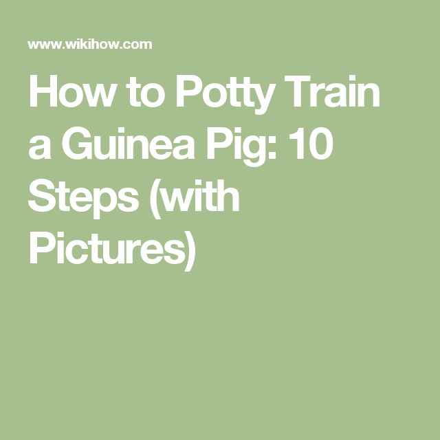 How to Potty Train a Guinea Pig: 10 Steps (with Pictures)
