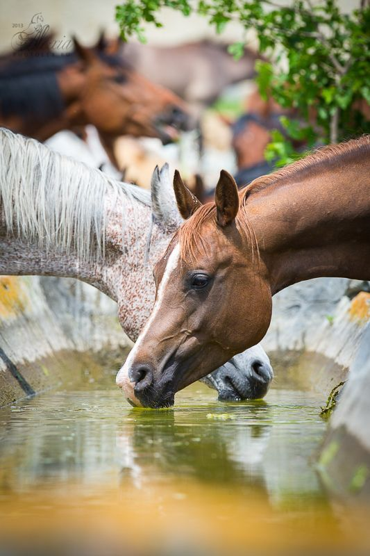 My Horse Isn T Drinking Water