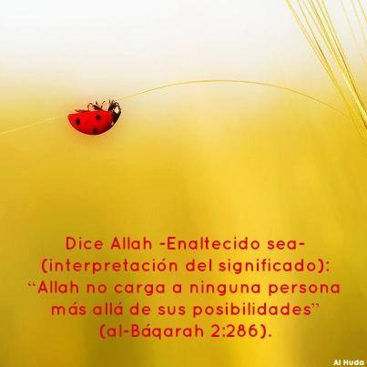 #Allah  #Quran  #Coran  #Islam