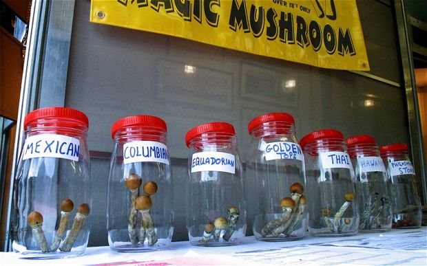 Magic Mushrooms treatment for depression being delayed by drug laws  #legislation #law #mushroom #drugs #High #SUPERHIGH