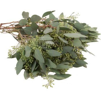 Seeded Eucalyptus: all year except April, May and June