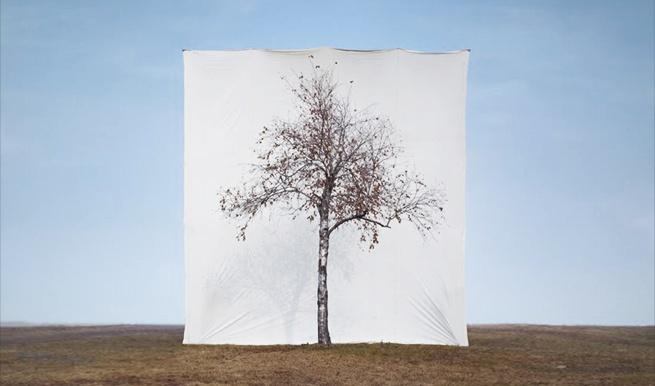 """TREE #1 """"Treescapes"""" - 아티스트 이명호(1975)의 예술과 현실의 경계를 모호하게 만드는 정교한 사진 작품"""