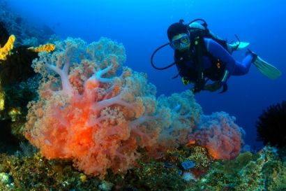 Diving -