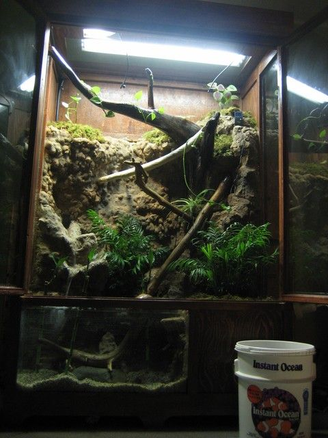 Chinese Water Dragon - tank setup Want to build something like this