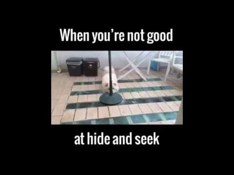 cheaptravelbooker blogg: very funny dog play hide and seek,very funny video...